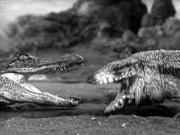 alligator_1940_01.jpg