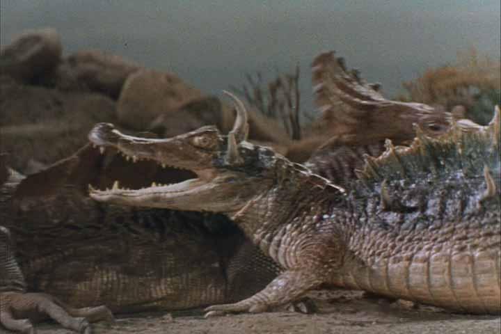 alligator_1960_01.jpg