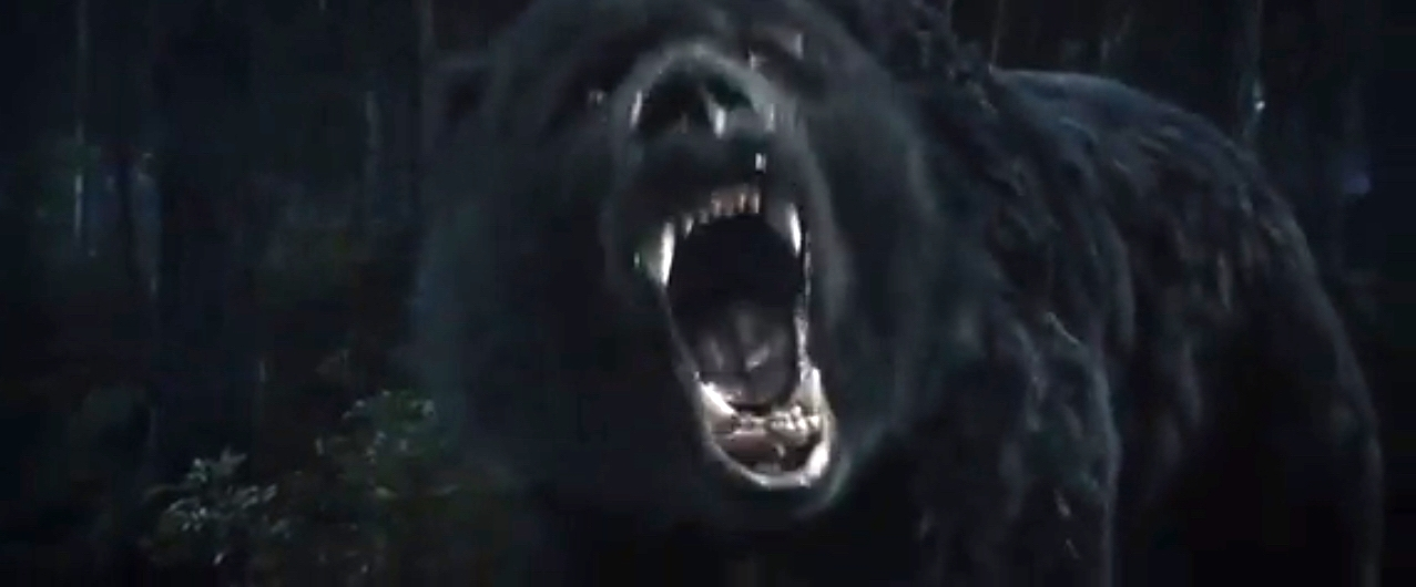bear_2013_01.jpg