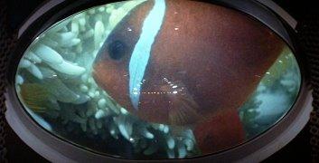 clownfish_1973_01.jpg