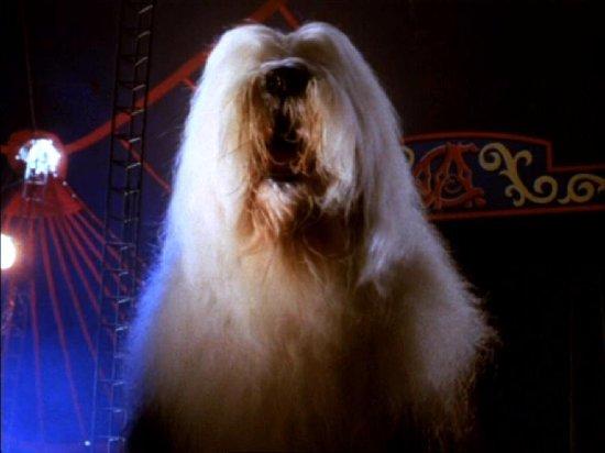 Dog Giant Kaijumatic