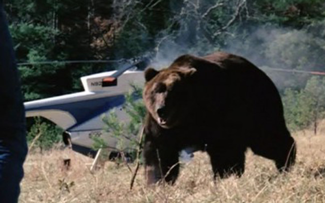 grizzly_1976_01.jpg