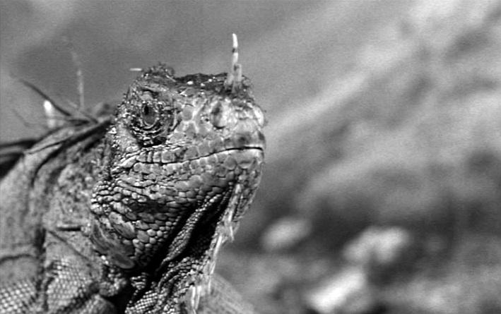 king_dinosaur_1955_01.jpg