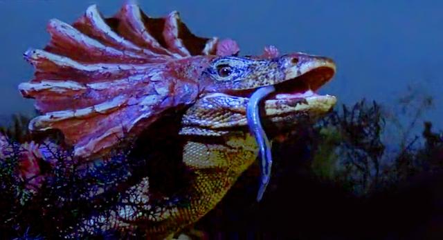 lizard_1960_03.jpg