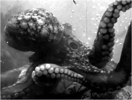 octopus_1955_03.jpg