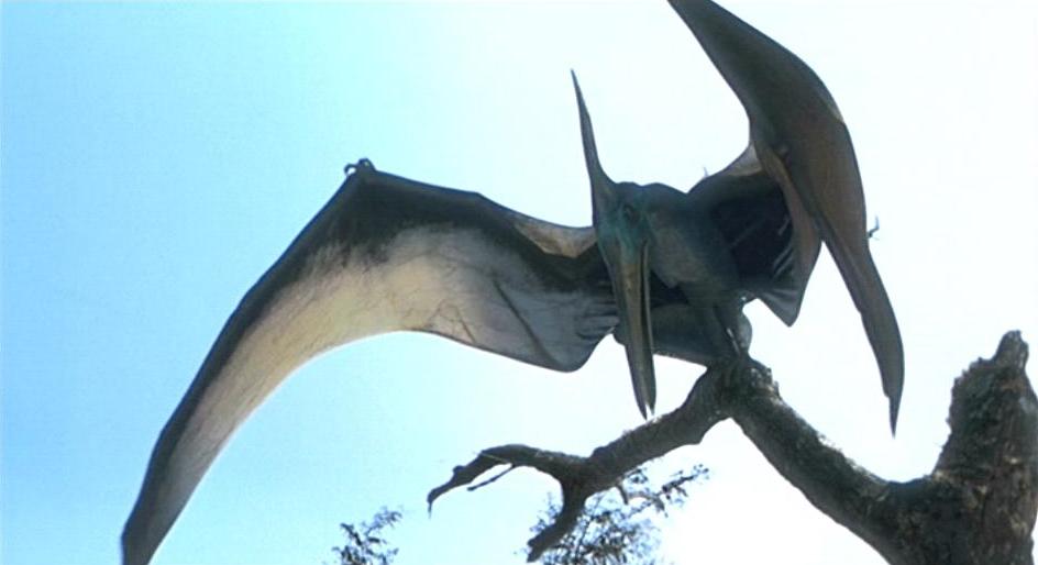 pteranodon_1997_01.jpg
