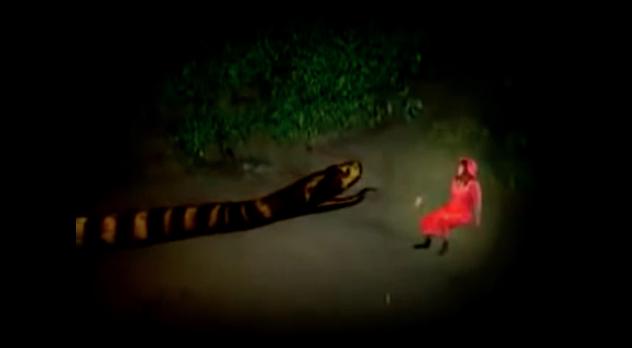 snake_2010_01.jpg