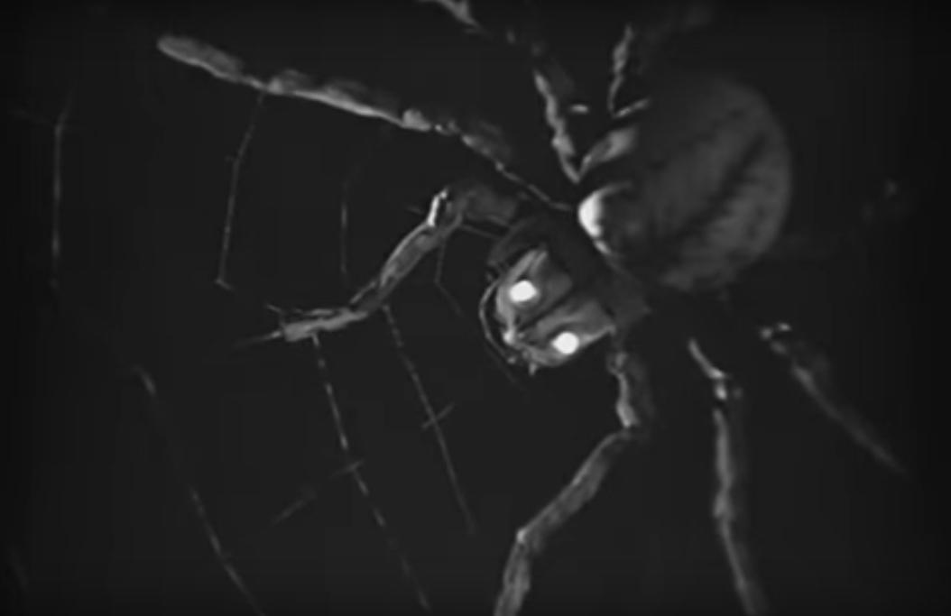 spider_1939_01.jpg