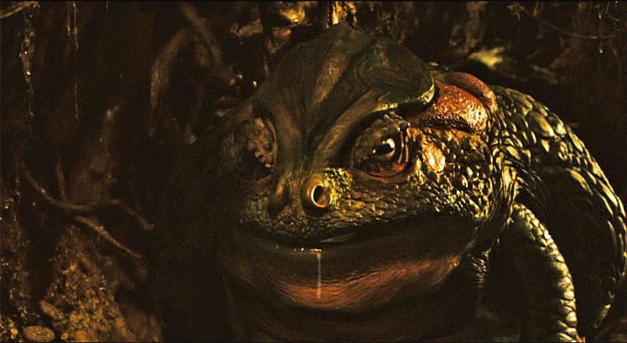 toad_2006_01.jpg