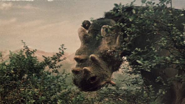 uintatherium_1955_01.jpg