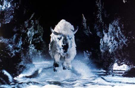 white_buffalo_1977_01.jpg
