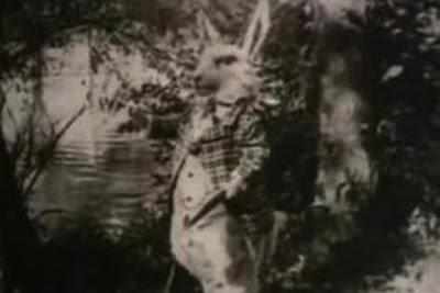 white_rabbit_1915_01.jpg
