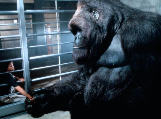 young_mighty_joe_1998_01.jpg